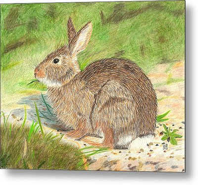 Peter Cottontail Metal Print by Sheila Byers