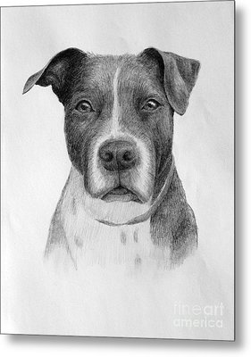 Petey Metal Print by Denise M Cassano