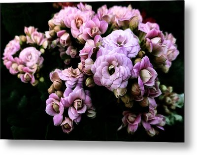 Petite And Pink Metal Print by Steve Taylor