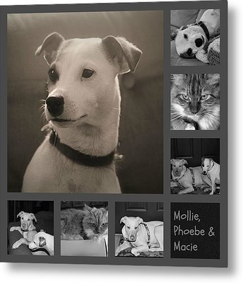 Pets Collage Metal Print by Carolyn Ricks