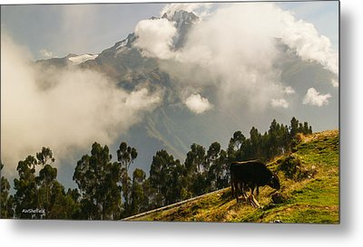 Peru Mountains With Cow Metal Print