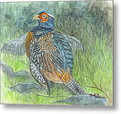 Metal Print featuring the drawing Pheasant Common Male by Carol Wisniewski