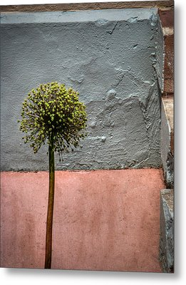 Philly Plant Metal Print by Glenn DiPaola