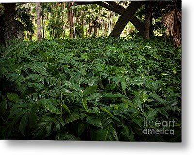 Philodendron Covering Metal Print