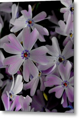 Phlox- Limited Edition 1 Of 10 Metal Print