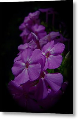 Phlox Metal Print by Tim Good