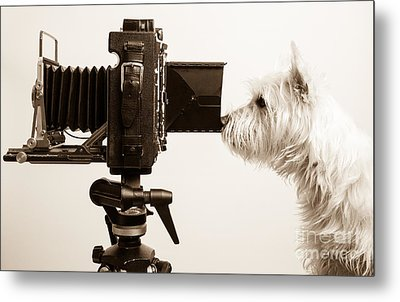 Pho Dog Grapher Metal Print