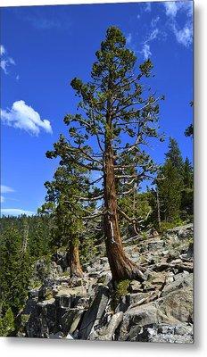 Trees Near Emerald Bay Lake Tahoe Metal Print