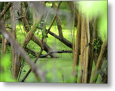 Green Water At Brazos Bend State Park In Texas Metal Print by Alex King