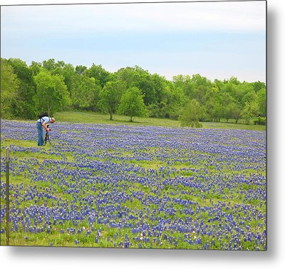 Photographing Texas Bluebonnets Metal Print by Connie Fox
