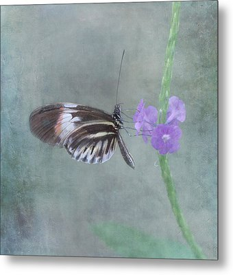 Piano Key Butterfly Metal Print by Kim Hojnacki