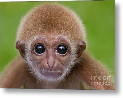 Pick A Card Any Card Metal Print by Ashley Vincent