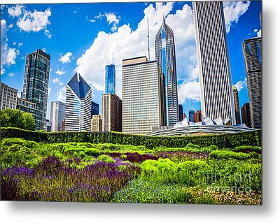 Picture Of Lurie Garden Flowers With Chicago Skyline Metal Print by Paul Velgos