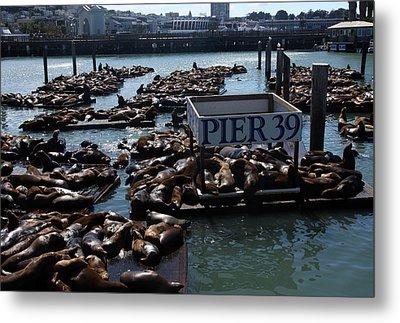 Pier 39 San Francisco Bay Metal Print by Aidan Moran