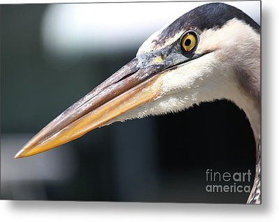 Piercing Look Metal Print by Theresa Willingham