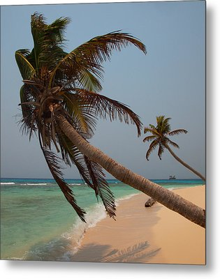 Pigeon Cays Palm Trees Metal Print