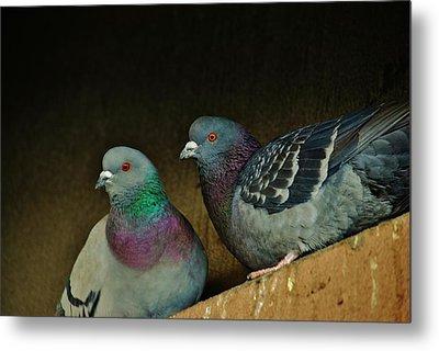 Pigeon Couple Metal Print by Joy Bradley