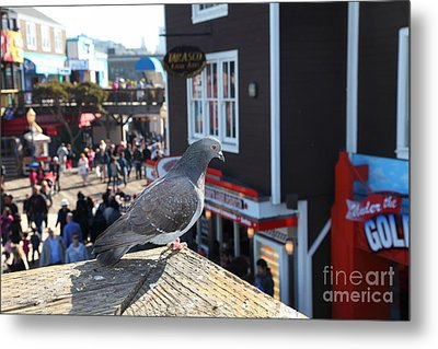 Pigeon Enjoying Pier 39 In San Francisco California 5d26131 Metal Print by Wingsdomain Art and Photography