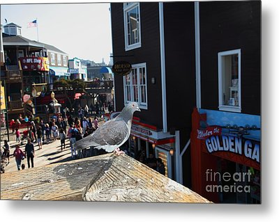Pigeon Enjoying Pier 39 In San Francisco California 5d26132 Metal Print by Wingsdomain Art and Photography