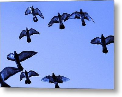 Pigeon Flying In Blue Sky Metal Print