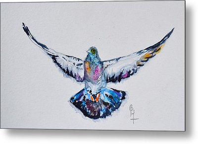Pigeon In Flight Metal Print by Beverley Harper Tinsley