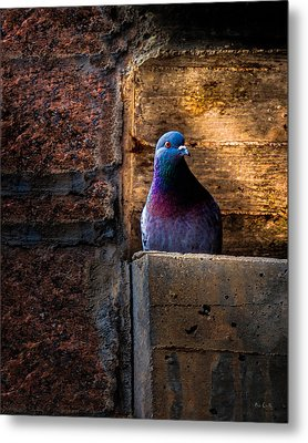 Pigeon Of The City Metal Print by Bob Orsillo