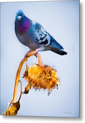 Pigeon On Sunflower Metal Print