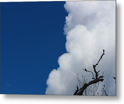 Pigeons Follow Clouds Metal Print by Kym Backland