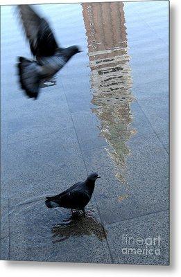 Pigeons In Piazza San Marco. Venice. Italy. Metal Print by Bernard Jaubert