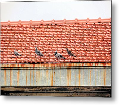 Metal Print featuring the photograph Pigeons On Roof by Aaron Martens