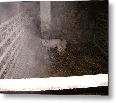 Piggies Metal Print
