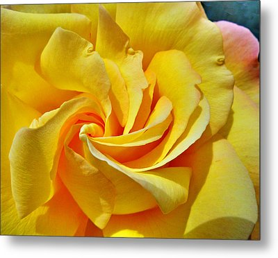 Pimp My Rose  Metal Print by Steve Taylor