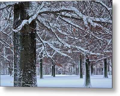 Metal Print featuring the photograph Pin Oak Snow by Ann Murphy
