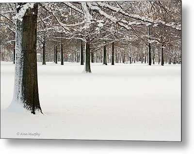 Metal Print featuring the photograph Pin Oaks Covered In Snow by Ann Murphy