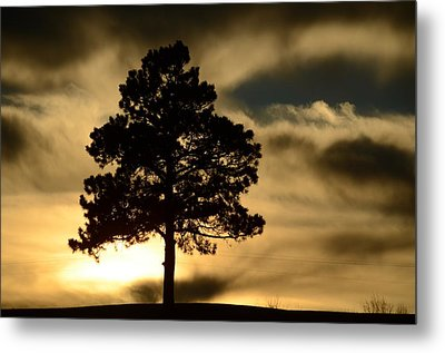 Pine At Sundown Metal Print