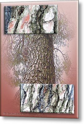 Pine Bark Study 1 - Photograph By Giada Rossi Metal Print by Giada Rossi