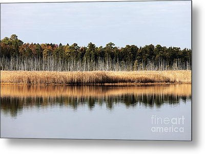 Pine Barrens Reflections Metal Print by John Rizzuto