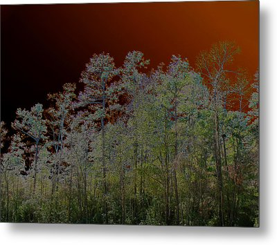 Pine Forest Metal Print by Connie Fox