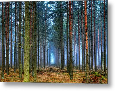 Pine Forest In Morning Fog Metal Print by EXparte SE