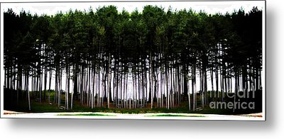 Pine Forest Metal Print by Marcia Lee Jones