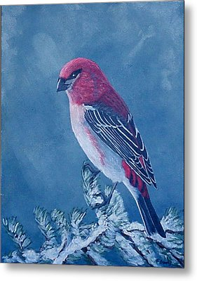 Pine Grosbeak Metal Print by Fran Brooks