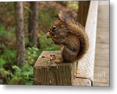 Pine Lunch Metal Print by Charles Kozierok