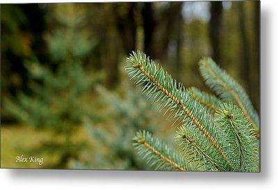 Pine Tree Metal Print by Alex King