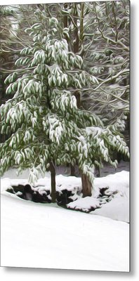 Pine Tree Covered With Snow 2 Metal Print by Lanjee Chee