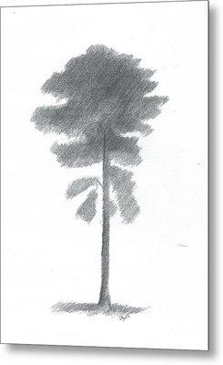 Pine Tree Drawing Number Four Metal Print by Alan Daysh
