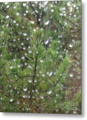 Pine Tree In The Rain Metal Print