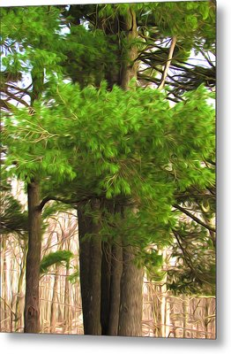 Pine Tree Metal Print by Lanjee Chee