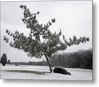 Pine Tree Metal Print by Melinda Fawver