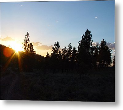 Pine Tree Sunset Metal Print by Mark Russell