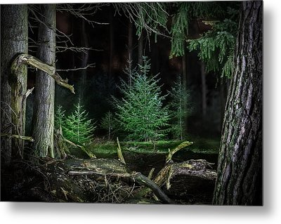 Pine Trees New Life Metal Print by Dirk Ercken